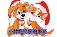 小林寵物機場接送提供台北.新北.基隆.桃園帶寵物出國去機場回國接機叫車服務_圖片(1)