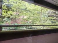 樹海綠景精品3房+車位_圖片(3)