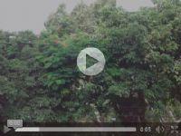 HTML 5 Video 影片播放語法教學_圖片(1)
