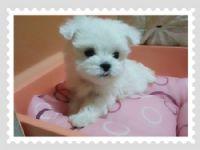 Cute☆ 甜美小瑪爾  _圖片(1)
