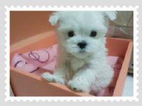 Cute☆ 甜美小瑪爾  _圖片(2)