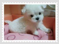 Cute☆ 甜美小瑪爾  _圖片(3)