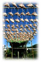 飛魚祭_圖片(1)