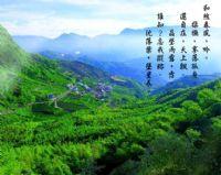 阿里山國家風景區_圖片(1)