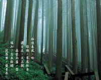 阿里山國家風景區_圖片(2)