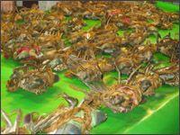 布袋觀光魚市場_圖片(4)