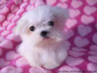 我想領養或購買狗狗_圖片(1)