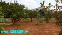 ●楊梅區 ~ ㊣12米休閒農地●近幼獅交流道_圖片(2)