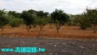 ●楊梅區 ~ ㊣12米休閒農地●近幼獅交流道_圖片(3)