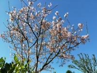 ●新埔 ~ 油桐花山莊●景觀農地_圖片(2)