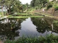 ●新埔 ~ 休閒農地●有池塘_圖片(1)