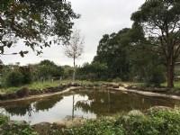 ●新埔鎮 ~ 樂活開心農場●送屋送魚池_圖片(4)