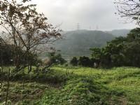 ●新埔~景觀農地1100坪●近照東國小_圖片(1)