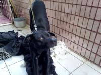 愛撒嬌的小黑 希望你可以幫助和我一樣幫助他_圖片(2)