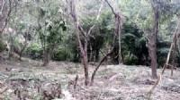 獅頭山休閒漂亮美地*-*合法一棟農舍、山泉水、森林、好山、好水、無污染源_圖片(3)