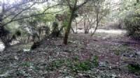獅頭山休閒漂亮美地*-*合法一棟農舍、山泉水、森林、好山、好水、無污染源_圖片(4)