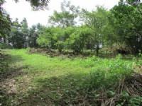 南庄渡假休閒農莊*-*現有一棟合法農舍(38.83坪)、水、電皆齊_圖片(4)