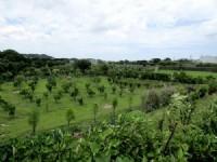 ~頭份休閒美農地~*-*陽光綠意生活、養生休閒美地、現有種植櫻花、竹南頭份農地_圖片(1)