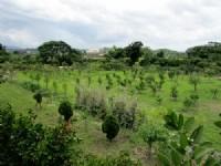 ~頭份休閒美農地~*-*陽光綠意生活、養生休閒美地、現有種植櫻花、竹南頭份農地_圖片(2)