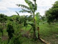 ~頭份休閒美農地~*-*陽光綠意生活、養生休閒美地、現有種植櫻花、竹南頭份農地_圖片(3)