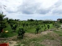 ~頭份休閒美農地~*-*陽光綠意生活、養生休閒美地、現有種植櫻花、竹南頭份農地_圖片(4)