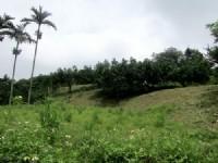 ~頭份漂亮農舍休閒地~*-*環境清幽、地主已整理、蓋農舍最佳、竹南頭份農地_圖片(4)