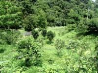 ~在水一方休閒小木屋~*-*環境清幽、退休居住最適合、竹南頭份農地、投資自用_圖片(1)
