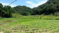 ~漂亮休閒農地~*-*平坦、視野開闊、竹南頭份農地、投資理財、成交快不動產_圖片(1)