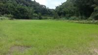 ~漂亮休閒農地~*-*平坦、視野開闊、竹南頭份農地、投資理財、成交快不動產_圖片(4)