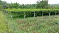 ~休閒農場漂亮美農地~*-*經營休閒民宿露營皆宜、竹南頭農地、投資自用_圖片(3)