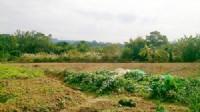 ~三灣超美休閒地~*-*蓋農舍或種植各種作物皆宜、投資自用兩相宜、竹南頭份農地_圖片(1)