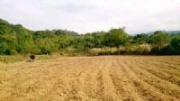 ~三灣超美休閒地~*-*蓋農舍或種植各種作物皆宜、投資自用兩相宜、竹南頭份農地_圖片(4)