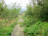 三灣漂亮休閒農牧用地6米路旁*-*頭份成交快*張先生_圖片(3)