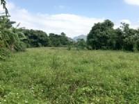 南庄屯營便宜農牧用地_圖片(2)