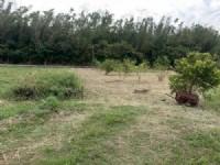頭份近市區便宜農地*-*苗栗買地、頭份買地、頭份農地_圖片(4)