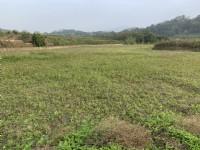 三灣漂亮美農地2*-*農地投資自用、農地買賣_圖片(3)