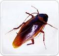 台北除蟲,除白蟻,除蚤除鼠除蟑螂,搜寶網推薦除蟲公司_圖片(1)