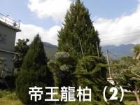 彰大農園-樹木盆景盆栽買賣_圖片(1)