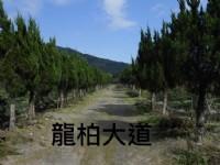 彰大農園-樹木盆景盆栽買賣_圖片(2)