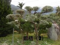 彰大農園-樹木盆景盆栽買賣_圖片(3)