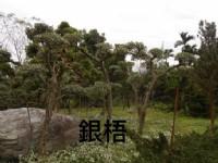彰大農園-樹木盆景盆栽買賣_圖片(4)
