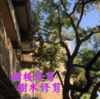 高雄修剪樹木枝,高雄樹木修剪公司- 修剪樹木費用價格公道_圖片(1)
