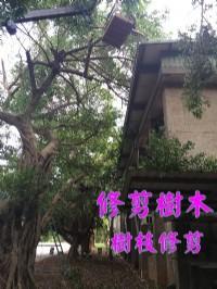 高雄修剪樹木枝,高雄樹木修剪公司- 修剪樹木費用價格公道_圖片(2)