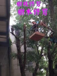高雄修剪樹木枝,高雄樹木修剪公司- 修剪樹木費用價格公道_圖片(3)