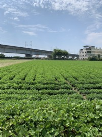 【售】虎尾文科路25米雙面路農地《中信房屋-虎尾大學加盟店》_圖片(2)