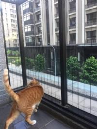 貓咪防墜│防貓墜樓網│防貓跳樓網│寵物防墜│隱形鐵窗_圖片(2)