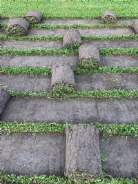 草皮自產自銷_圖片(3)