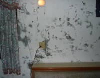 夫妻專作時間趕 中壢小家庭出租房屋壁癌油漆雜物清運,平鎮出租房屋壁癌油漆,龍潭出租房屋壁癌油漆,楊梅清潔,壁癌油漆粉刷,垃圾清運  口述狀況,就可估價很方便0927-102-040陳先生_圖片(3)