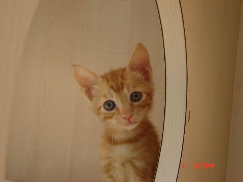 可爱小喵咪想要找一个家(已送出)
