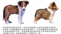 喜樂蒂公幼犬_圖片(1)